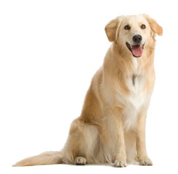 Hond bij trimsalon doedels